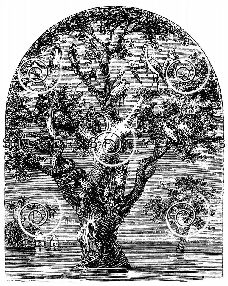 Vintage Birds in Tree Illustration - 1800s Animals Images