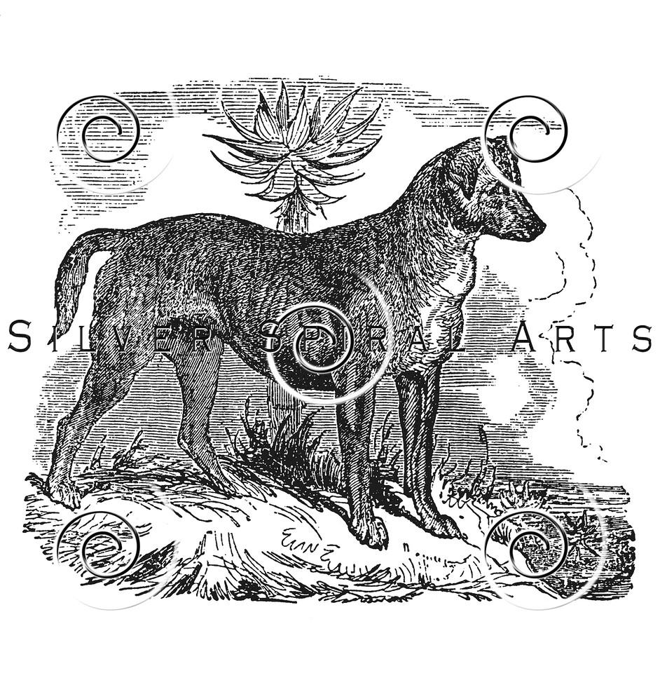 Vintage Bloodhound Dog Illustration - 1800s Dogs Images.