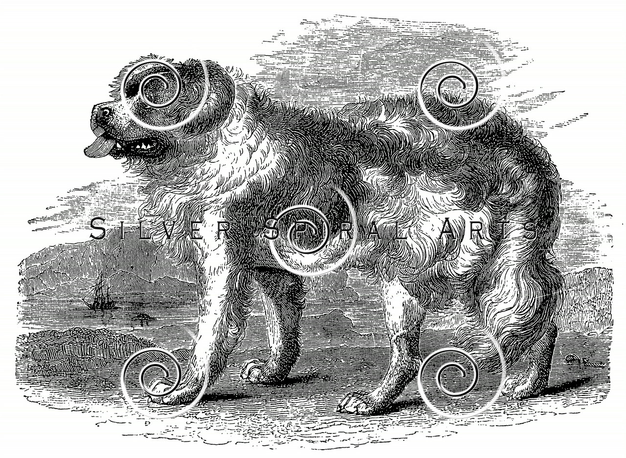 Vintage Newfoundland Dogs Illustration - 1800s Dog Images