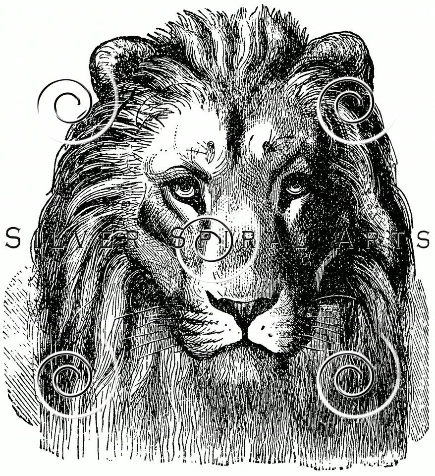 Vintage Lion Head Illustration - 1800s Lions Images