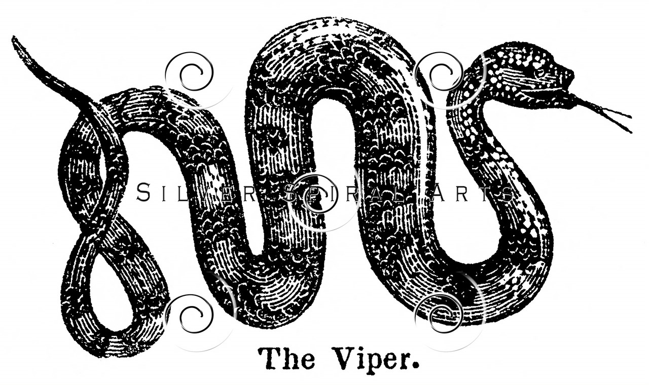 Vintage Viper Snake Illustration - 1800s Snakes Images.