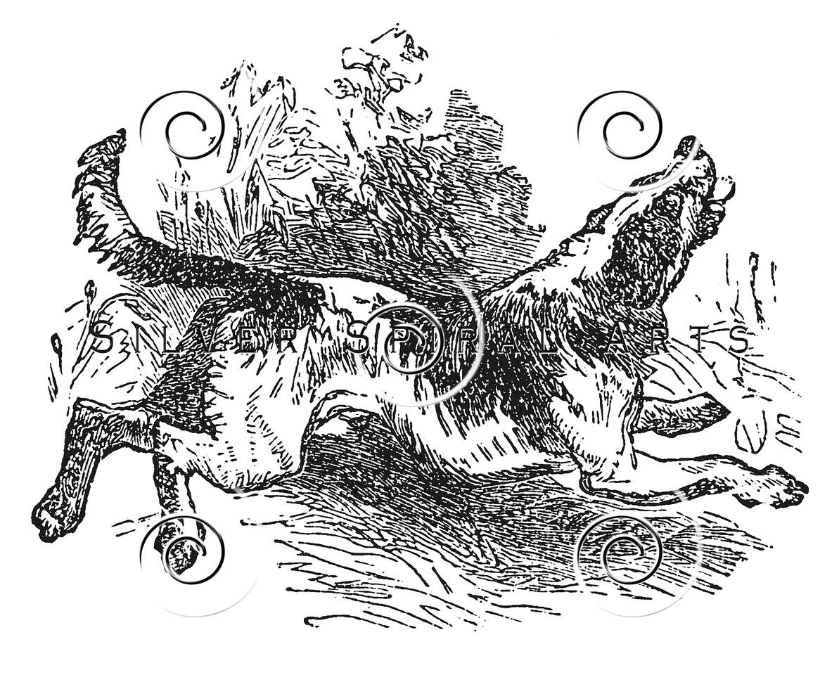 Vintage Beagle Foxhound Dog Illustration - 1800s Hound Dogs Images.
