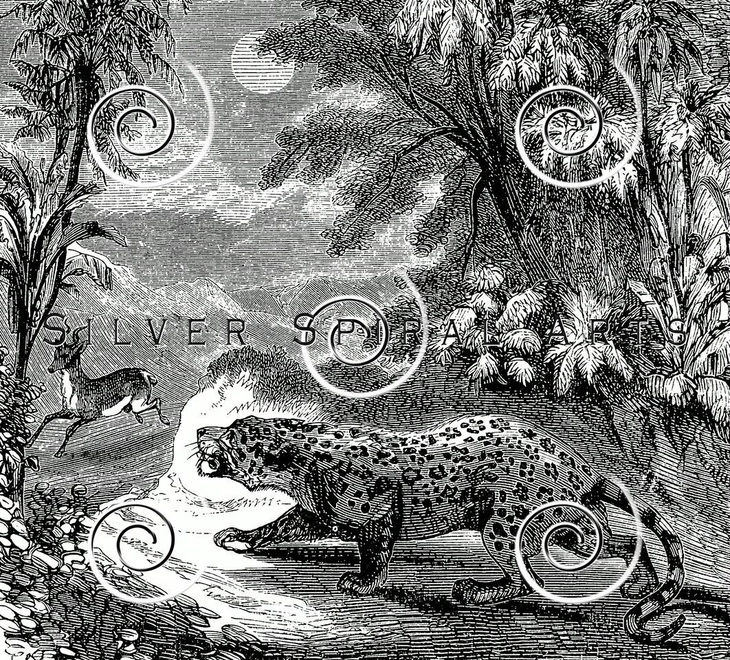 Vintage Panther Tiger Leopard Illustration - 1800s Hunting Images
