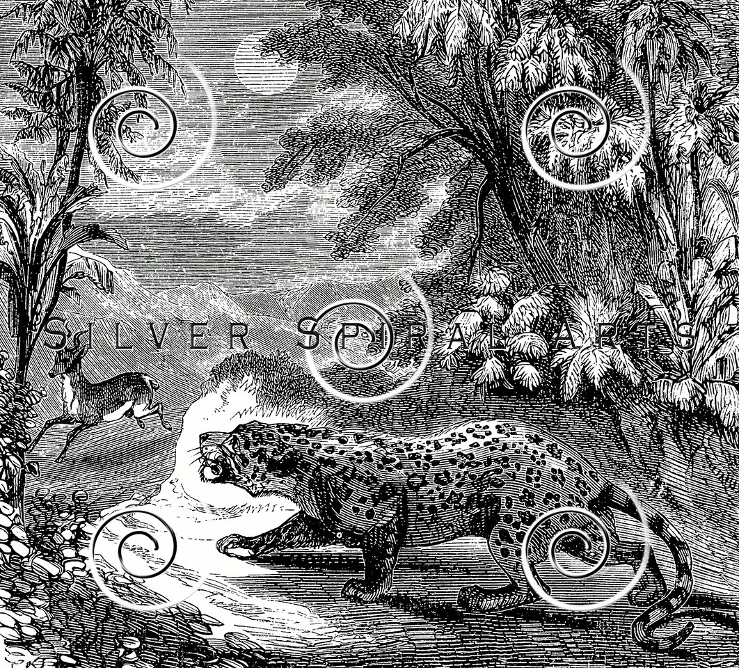 Vintage Panther Tiger Leopard Illustration - 1800s Hunting Images