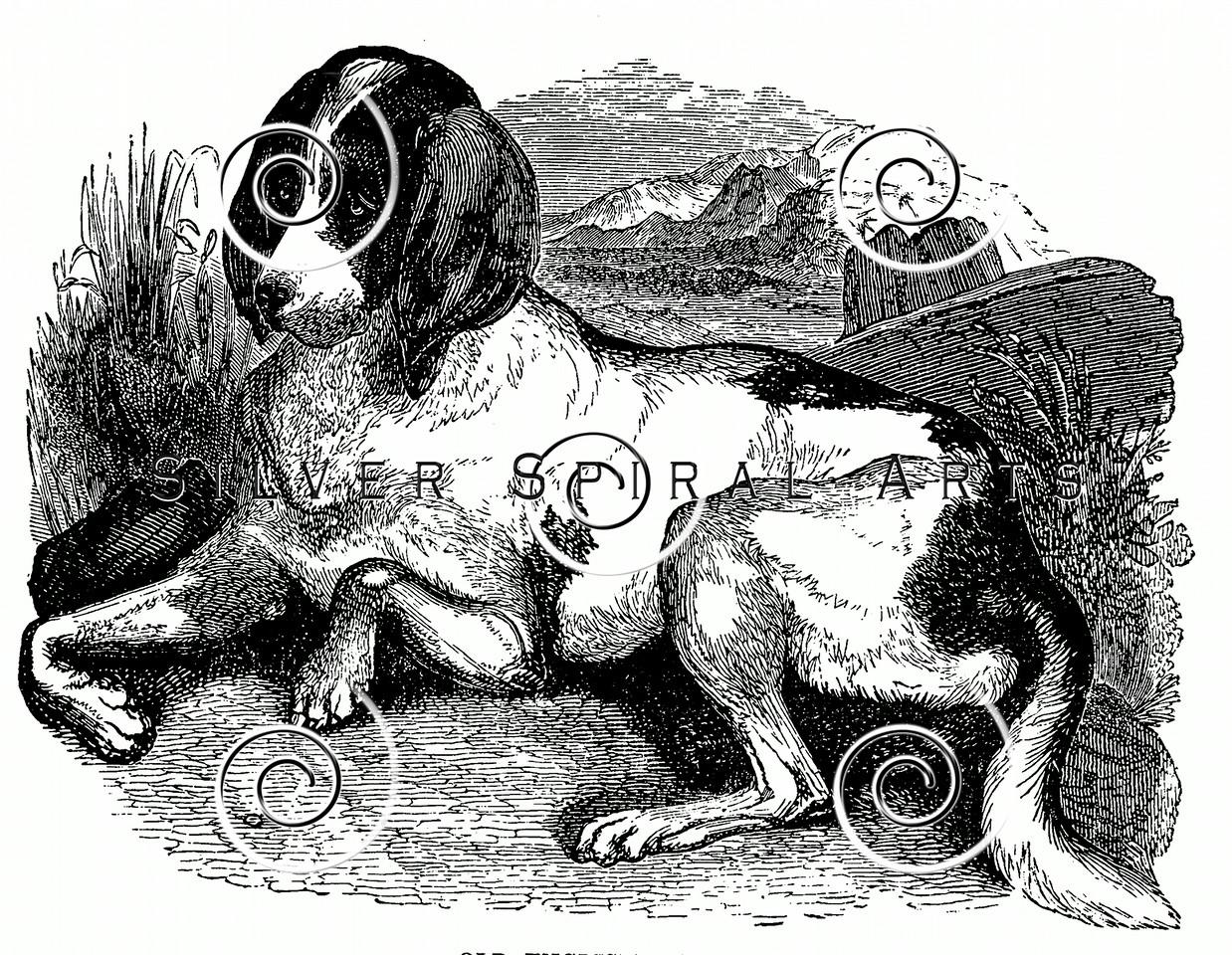 Vintage Hound Dogs Illustration - 1800s Dog Images