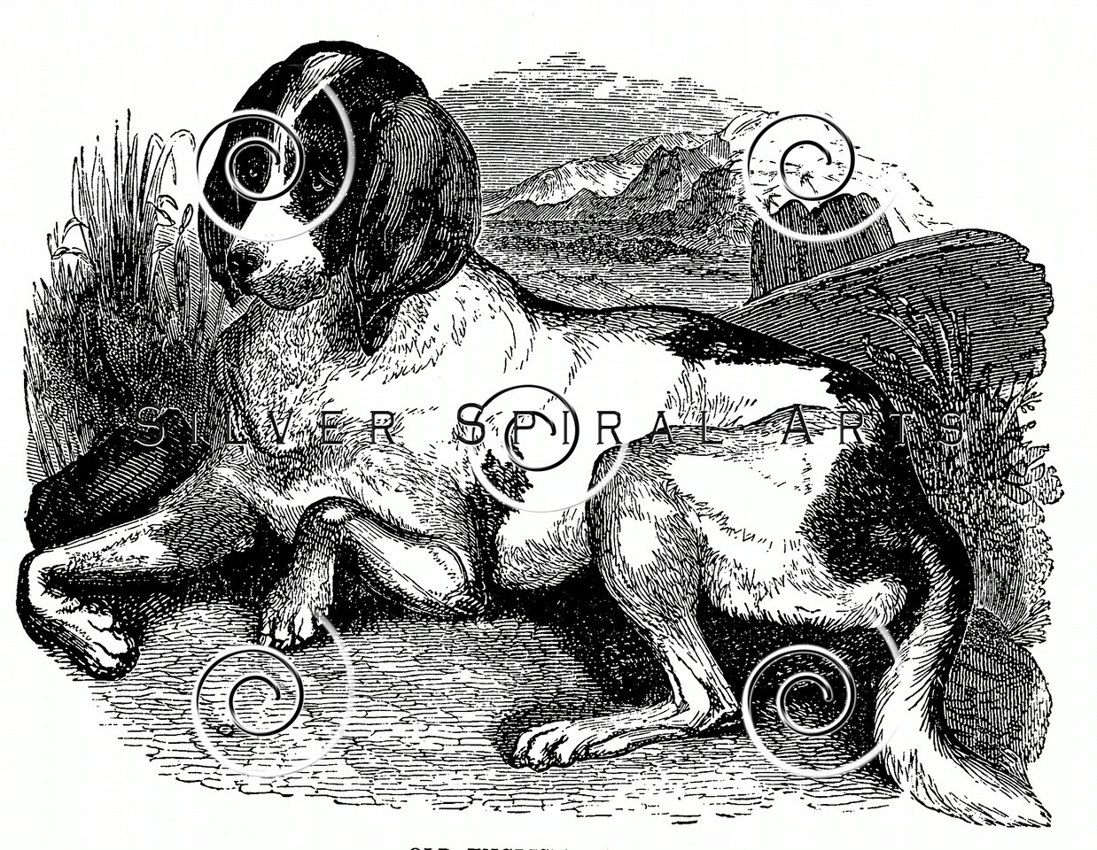 Vintage Hound Dogs Illustration - 1800s Dog Images