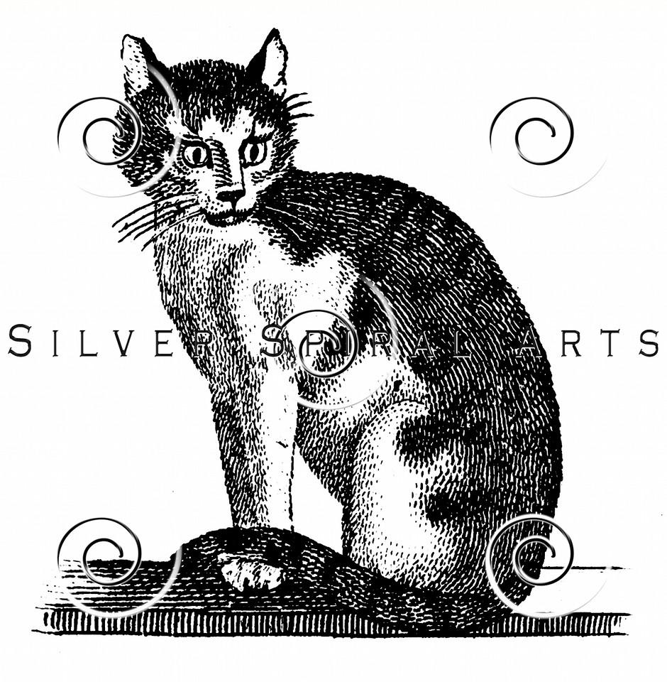 Vintage House Cat Illustration - 1800s Cats Images.