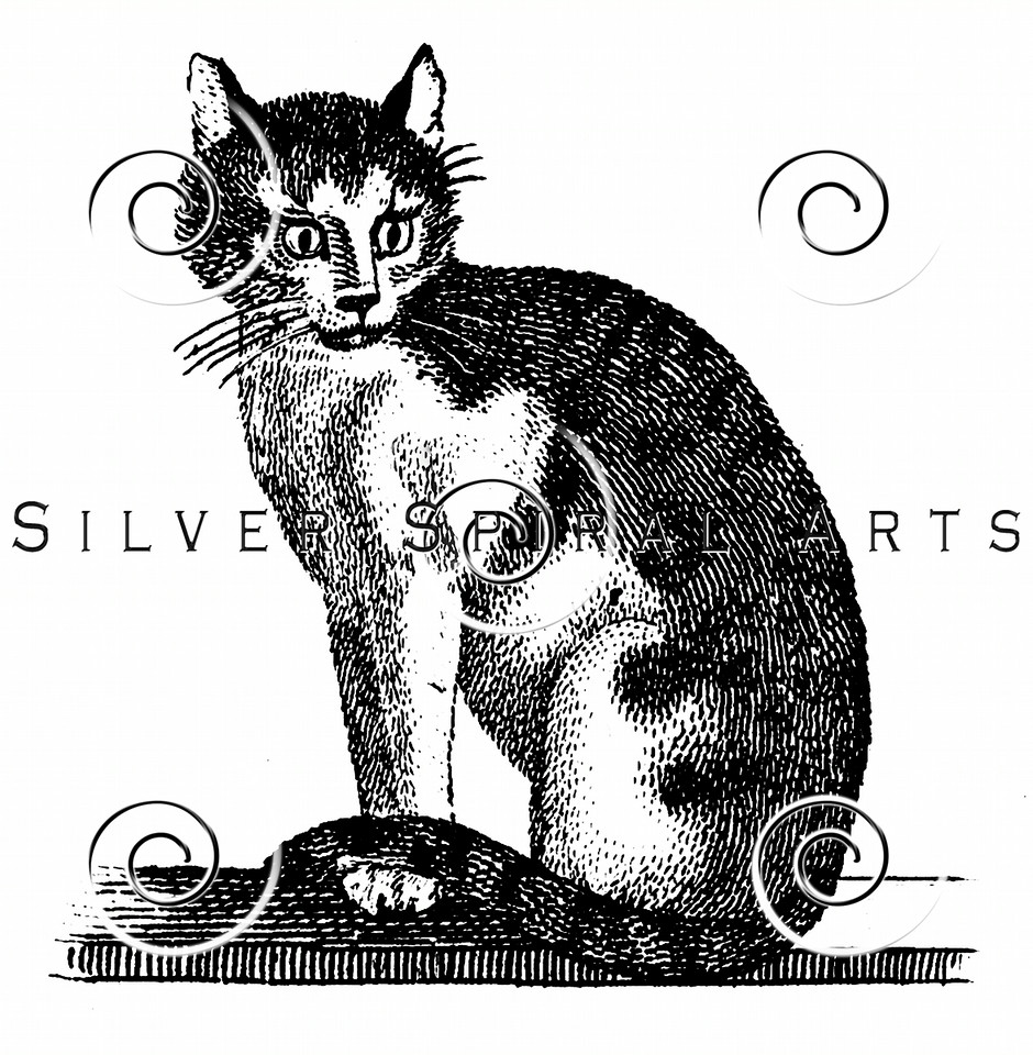 Vintage House Cat Illustration - 1800s Cats Images.