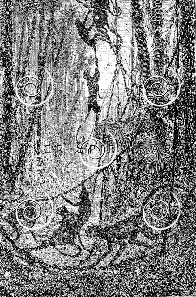 Vintage Monkey Illustration - 1800s Monkeys Images.