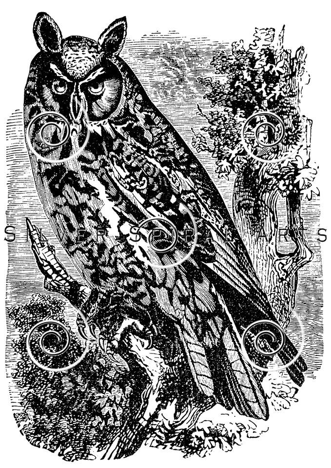 Vintage Owls Bird Illustration - 1800s Owl Birds Images