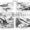 Vintage Waterfowl Bird Illustration - 1800s Water Birds Images.