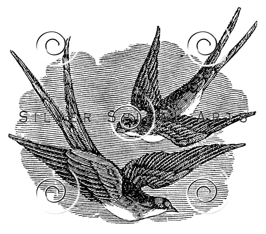 Vintage Chimney Swallow Bird Illustration - 1800s Swallows Birds Images.
