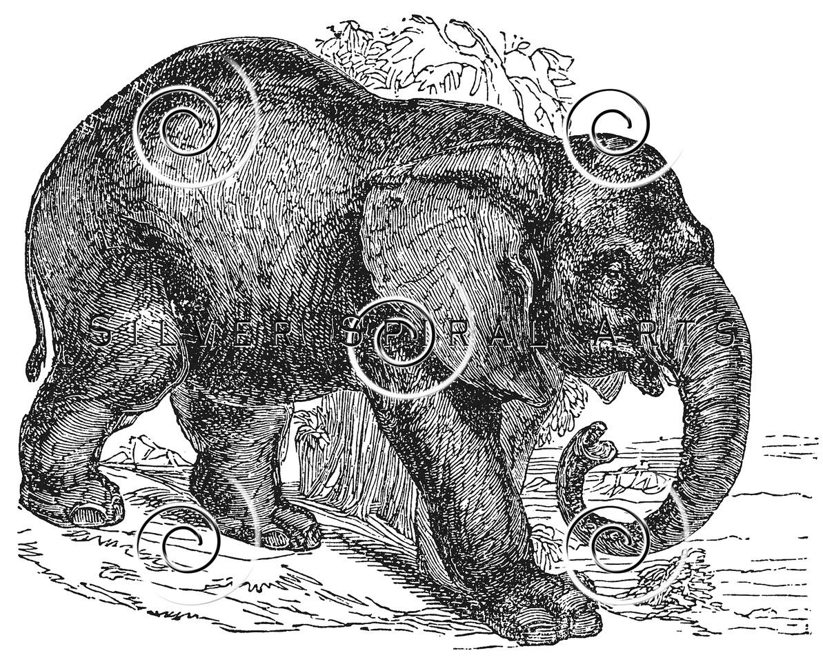 Vintage Elephant Illustration - 1800s Elephants Images.