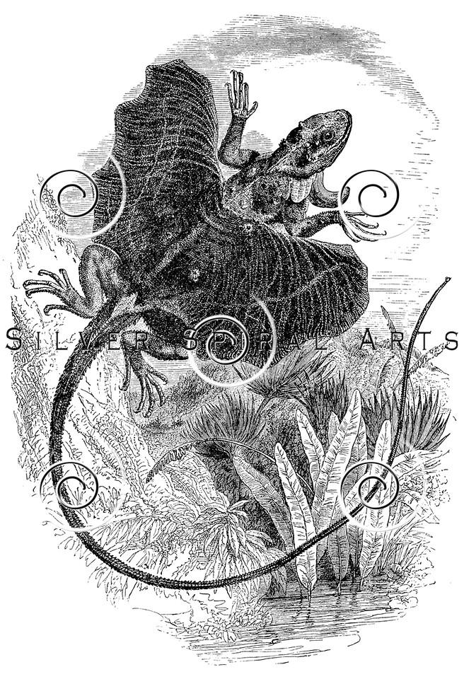Vintage Flying Dragon Illustration - 1800s Lizard Images