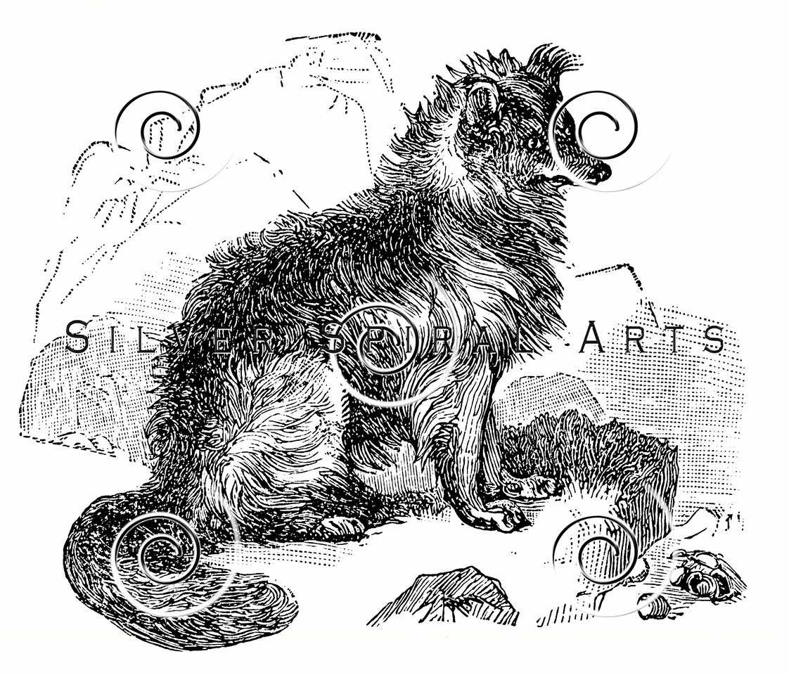 Vintage Border Collie Dog Illustration - 1800s Dogs Images.