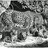 Vintage Leopard Panther Cubs Illustration - 1800s Leopards Images.