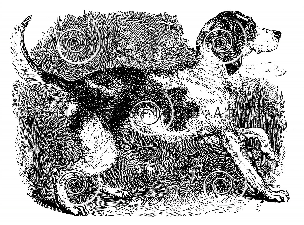 Vintage Fox Hound Dogs Illustration - 1800s Dog Images