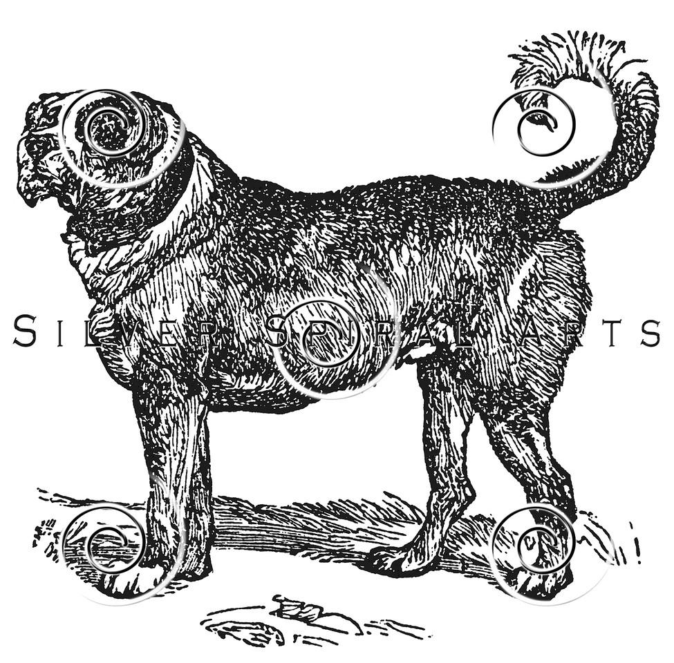 Vintage Mastiff Dog Illustration - 1800s Dogs Images.