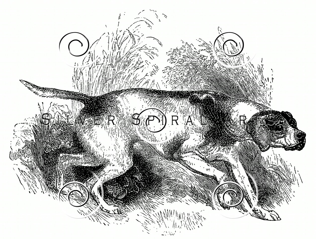 Vintage Pointer Dogs Illustration - 1800s Dog Images