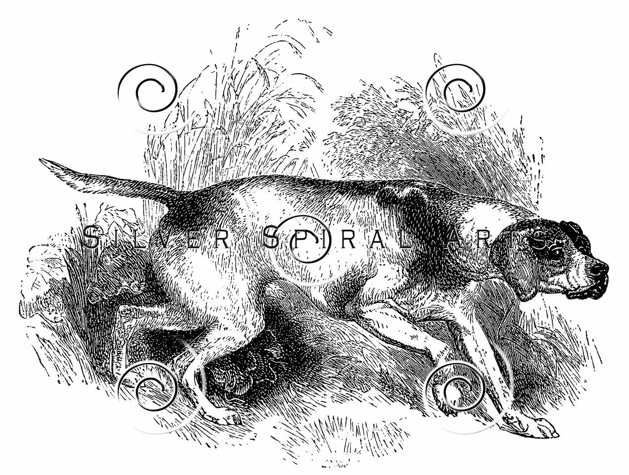 Vintage Pointer Dogs Illustration - 1800s Dog Images