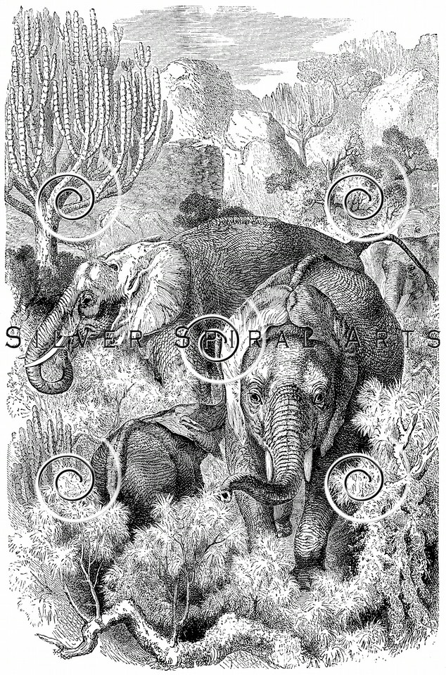 Vintage Elephant Illustration - 1800s Elephants Images.