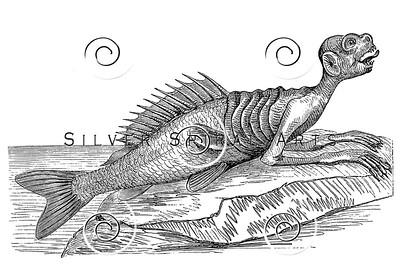 Vintage Merman Illustration - 1800s Sea Creature Images.