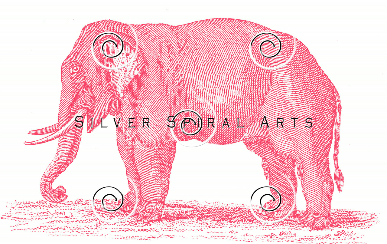 Vintage Pink Elephant Illustration - 1800s Elephants Images.