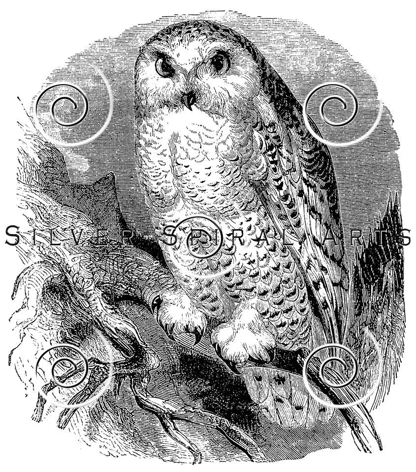 royalty free stock vintage illustrations photo keywords owls art
