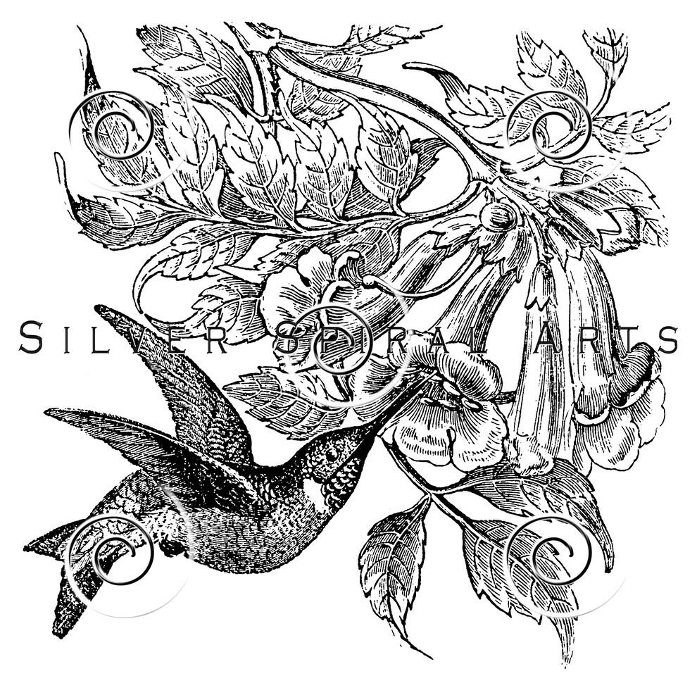 Vintage Hummingbird Flowers Bird Illustration - 1800s Hummingbirds Birds Images.