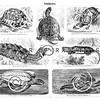 Vintage Turtles Illustration - 1800s Turtle Images.