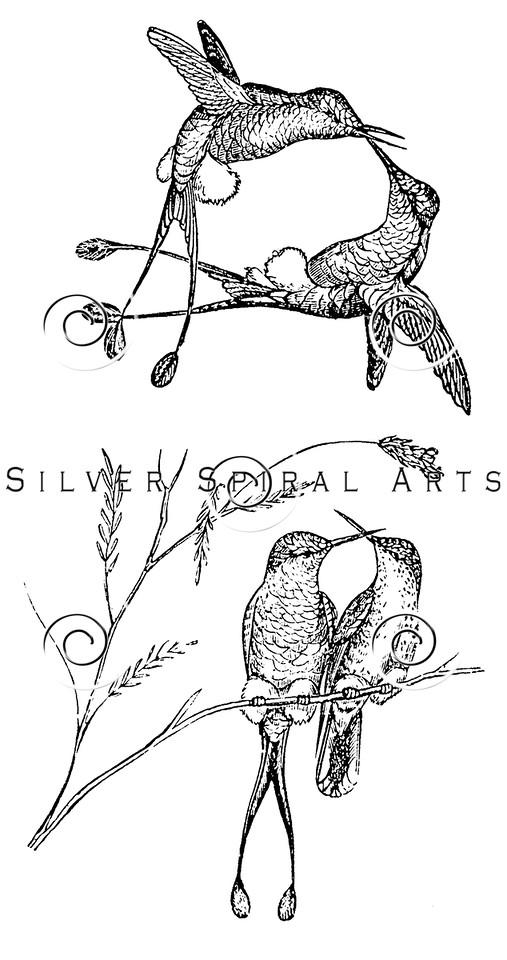 Vintage Hummingbirds Bird Illustration - 1800s Hummingbird Birds Images