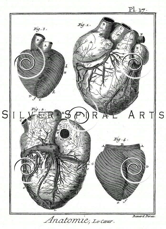 Vintage 1700s Sepia Anatomy Illustration of Heart Diagrams from ENCYCLOPEDIE RAISONNE DES SCIENCES by Diderot.  The natural patina, age-toning, imperfections, and old paper antiquing of this vintage 18th century illustration are preserved in this image.