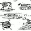 Vintage Animal Skeletons Illustration - 1800s Bones Images.
