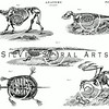Vintage Animal Skeletons Illustration - 1800s Bones Images.
