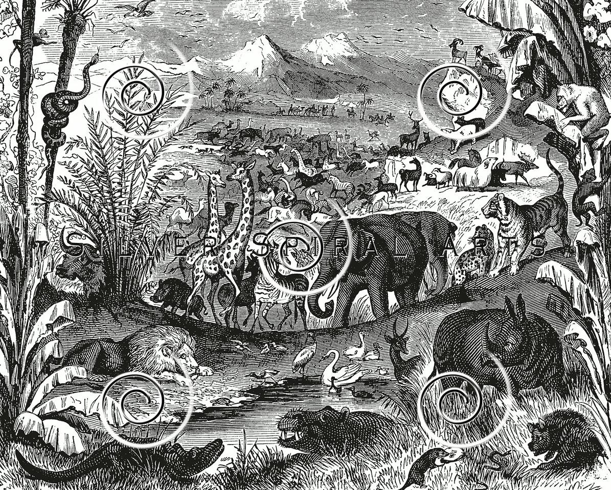 Vintage African Animals Illustration - 1800s Elephant Lion Images