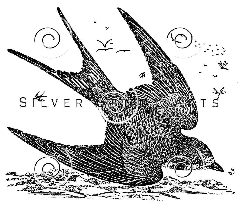 Vintage Swallow Bird Illustration - 1800s Swallows Birds Images.