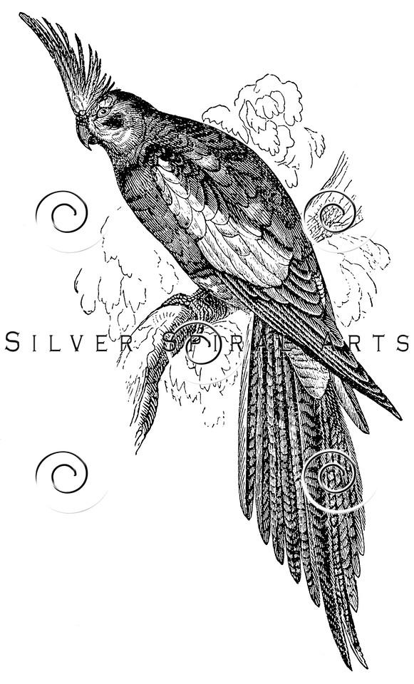 Vintage OBJECT Illustration - 1800s OBJECT Images
