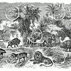 Vintage Mammal Animals Illustration - 1800s Mammals Animal Images
