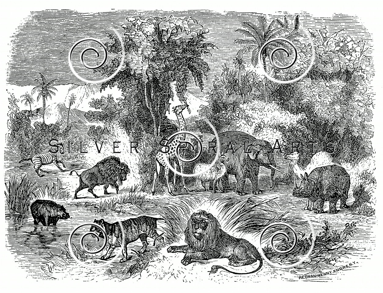 Vintage Mammal Animals Illustration - 1800s Mammals Animal Images