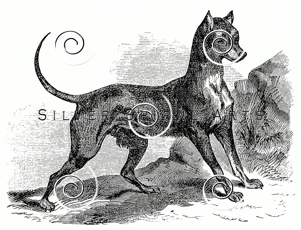 Vintage Doberman Dogs Illustration - 1800s Dog Images