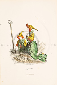 "Vintage Color Illustration of flower fairies from Jean Grandville's ""LES FLEURS ANIMMES"" (The Flowers Personified) printed in the mid 1800s. (1847)"