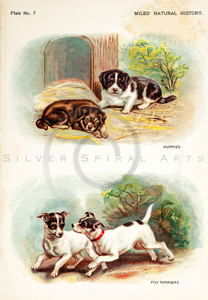 Vintage 1800s Color Illustration of Dogs and Puppies - FIVE HUNDRED FASCINATING ANIMAL STORIES by Alfred Miles.