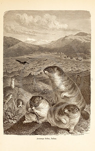 Vintage 1800s Sepia Illustration of Wild Animals  - ANIMATED CREATIONS, J.G. Wood.