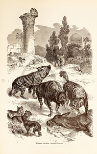Vintage 1800s Sepia Illustration of Wild Hyena - ANIMATED CREATIONS, J.G. Wood.