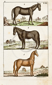 """Vintage Color Horse Illustration of hand colored copper engraving from """"UNTERHALTUNGEN NATURGESCHICHTE"""" (Conversations form Natural History) by J.X. Schmuzer in Germany in 1810"""