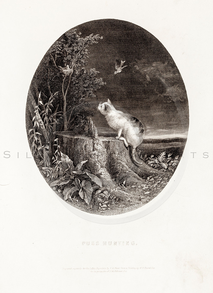 Vintage 1800s Sepia Illustration of a Cat