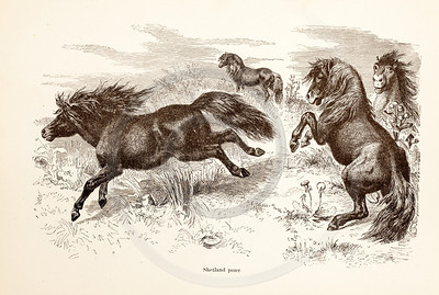 Vintage 1800s Sepia Illustration of Wild Ponies - ANIMATED CREATIONS, J.G. Wood.