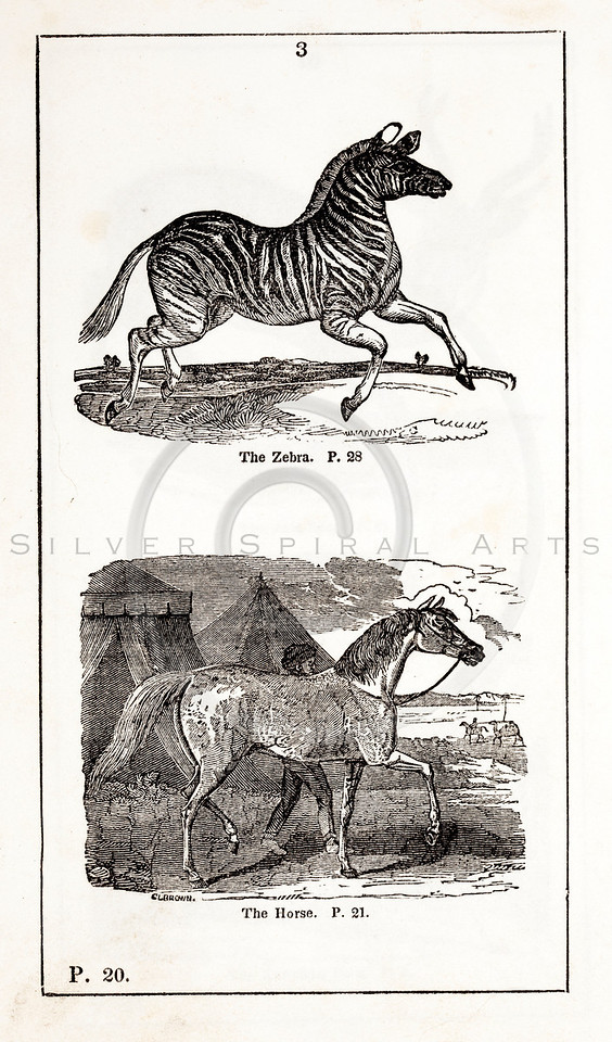 Vintage 1800s Black & White Illustration of Zebra and Horse - HISTORY OF THE EARTH & ANIMATED NATURE by Oliver Goldsmith.