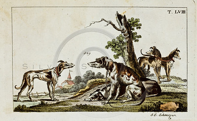 "Vintage Color Animal Illustration of hand colored copper engraving from ""UNTERHALTUNGEN NATURGESCHICHTE"" (Conversations form Natural History) by J.X. Schmuzer in Germany in 1811"