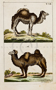"""Vintage Color Animal Illustration of hand colored copper engraving from """"UNTERHALTUNGEN NATURGESCHICHTE"""" (Conversations form Natural History) by J.X. Schmuzer in Germany in 1811"""